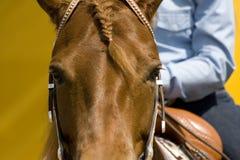 Détail occidental de matériel d'équitation Images libres de droits