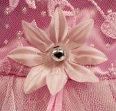 Détail rose de fleur Photographie stock libre de droits
