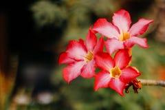 Détail rouge de fleur d'isolement avec le fond vert photographie stock libre de droits