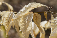 Détail sec de feuille, macro photographie, lumière de jour Photos stock