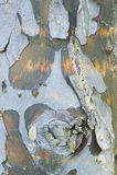 Détail simple d'arbre d'écorce Image libre de droits