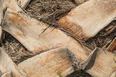 Détail supérieur de tronc de modèle de texture de fond de palmier Tronc de palmier vers le haut de macro fond étroit Écorce en bo photographie stock libre de droits