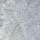 Détail superficiel par les agents naturel de modèle de texture de Grey Tree Trunk Cut Stump, grand fond texturisé lumineux détail photographie stock libre de droits