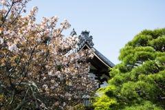 Détail sur le toit japonais de temple contre le ciel bleu pendant la saison de fleurs de cerisier Image libre de droits