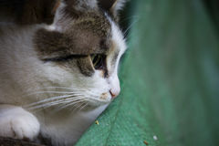 Détail sur un chat blanc et tigré contre se reposer sur une pile de bois avec un vieux tissu dans le coin inférieur droit photos stock