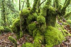Détail vert profondément dans la forêt célèbre d'héritage de Huelgoat à B photos libres de droits