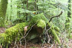 Détail vert profondément dans la forêt célèbre d'héritage de Huelgoat à B photo stock