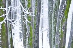 détaille l'hiver de forêt photos stock