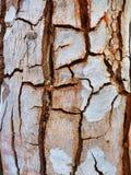 Détaillez de l'écorce d'arbre profondément criquée image libre de droits