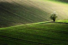 Détaillez le paysage au champ du sud de Moravian pendant le ressort, République Tchèque image stock