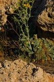Détails botaniques de jardin animal de nature de la Grèce Rhodos de lézard macro Photos stock