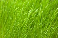 Détails d'herbe verte Image libre de droits