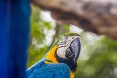 Détails d'un ara bleu photographie stock