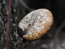 Détails de champignon de couche Photo stock