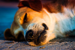 Détails de chien Image libre de droits