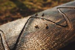 Détails de fin de l'apiculture  Les abeilles boivent l'eau d'un conseil en bois photo libre de droits