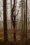 détails de forêt avec des troncs d'arbre et feuillage vert en été photos stock
