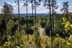 détails de forêt avec des troncs d'arbre et feuillage vert en été photos libres de droits