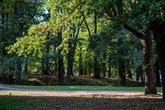détails de forêt avec des troncs d'arbre et feuillage vert en été photo stock