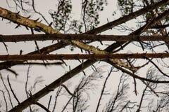 détails de forêt avec des troncs d'arbre et feuillage vert en été image stock
