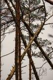 détails de forêt avec des troncs d'arbre et feuillage vert en été photo libre de droits
