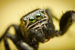 Détails de l'oeil de l'araignée Image libre de droits