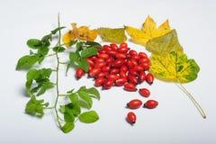 Détails de nature d'automne Image stock