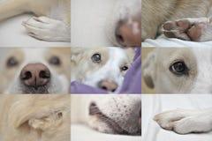 Détails de plan rapproché de chien Images libres de droits