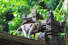 Détails de temple dans la forêt de singe d'Ubud Photo libre de droits