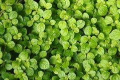 Détails des lames vertes photos stock