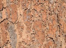 Détails en bois d'arbre d'écorce fermez-vous vers le haut du fond en bois de texture de vieille ride Image stock