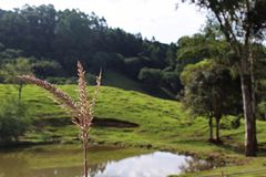 Détails sur le blé avec le fond d'un lac photographie stock libre de droits