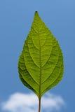 Détails verts de lame Images stock
