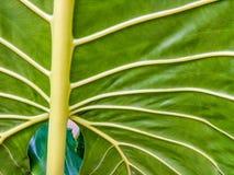 Détails verts de modèle de feuille photo libre de droits