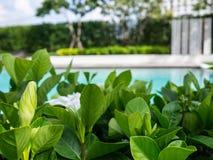 Détendez dans le beaux jardin et piscine Photographie stock