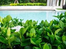 Détendez dans le beaux jardin et piscine Photographie stock libre de droits
