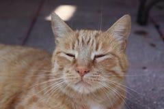 Détendez le chat images libres de droits
