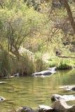 Détente, étang, nature Image libre de droits