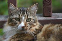 Détente de chat Photographie stock