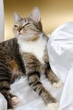 Détente de chat Image libre de droits