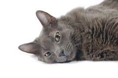 Détente de chat de Kitty Photographie stock libre de droits