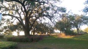 Détente paisible d'arbre Image libre de droits