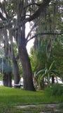 Détente par un lac observant la mousse espagnole balancer photo libre de droits