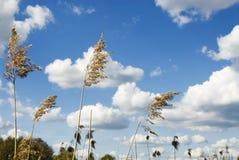Détruit dans le ciel Photo libre de droits