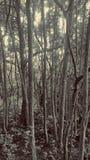 Détruit dans les bois Photo libre de droits