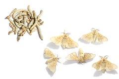 Développement de papillon Photographie stock libre de droits