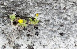 Développez-vous où vous ` au sujet de fleur jaune plantée dans la roche image libre de droits
