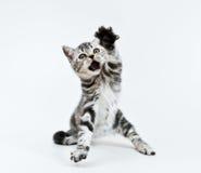 Dê-me!!! Fotografia de Stock Royalty Free