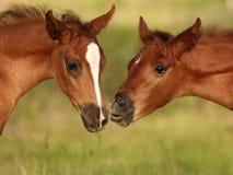 Dê-me um beijo Foto de Stock Royalty Free