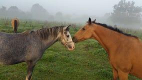 'Dê-me um beijo' fotos de stock royalty free